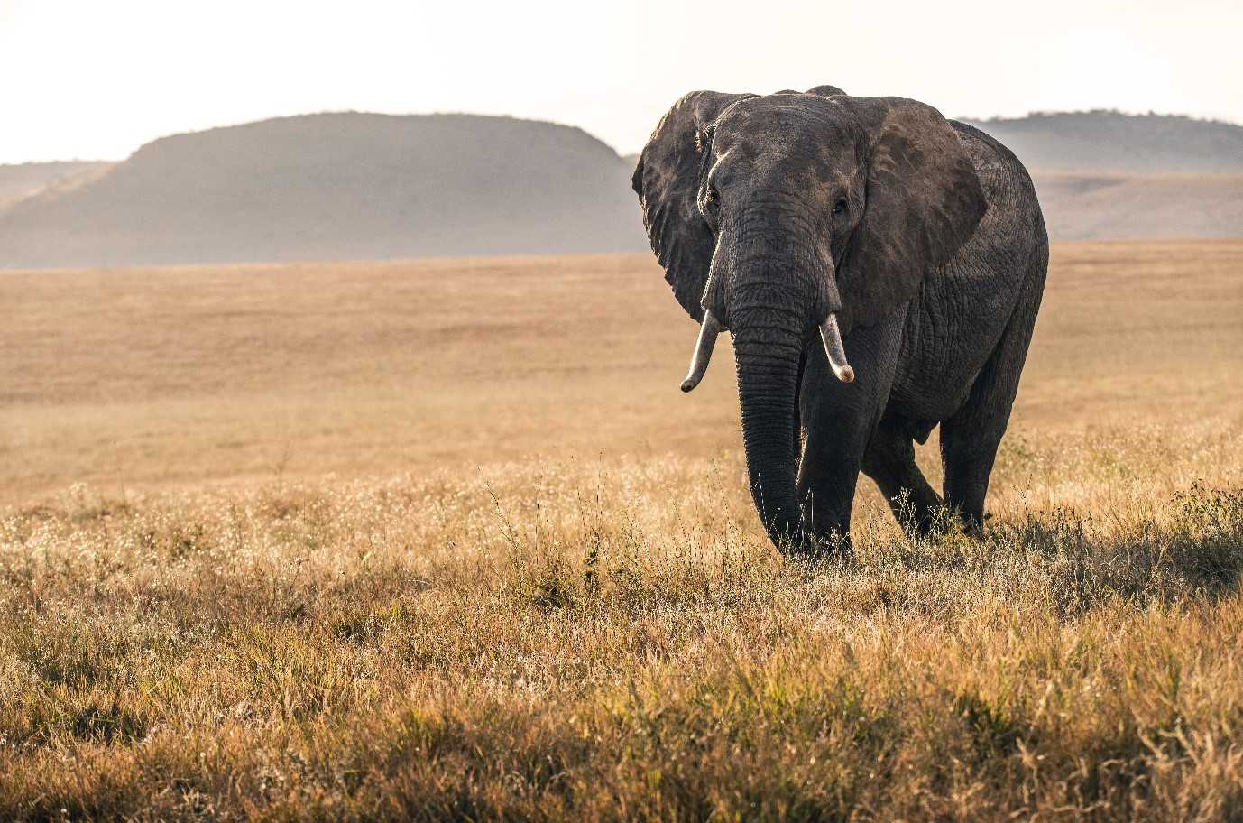 Lewa Wildlife Conservancy, Kenya. Photo by David Clode on Unsplash