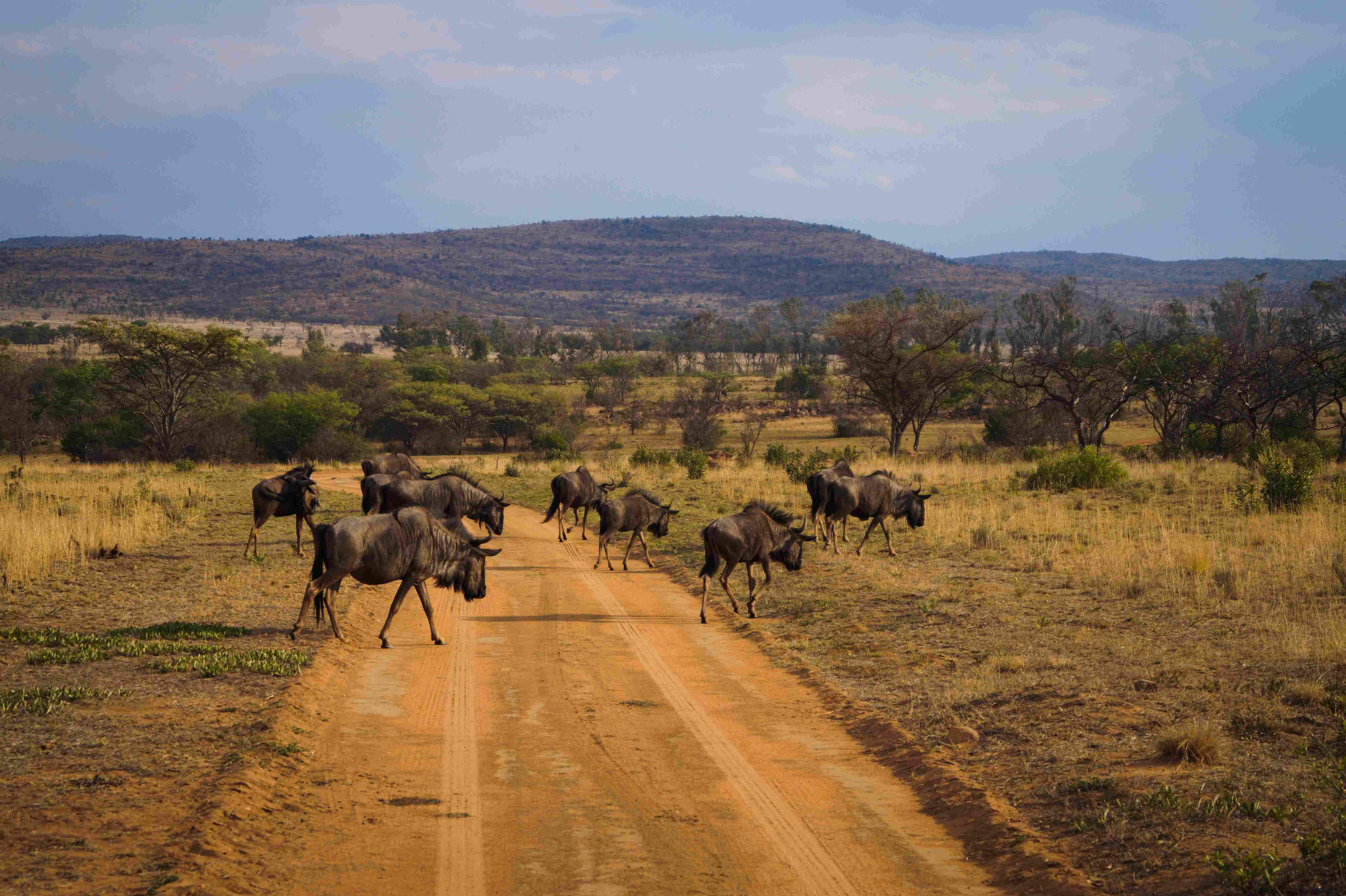 South Africa. Image by Jura Bakx on Unsplash